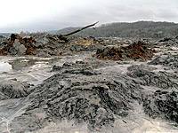 The TVA coal ash disaster last December unleashed billions of gallons of wet ash into nearby rivers