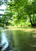 Chilling on the Watauga River