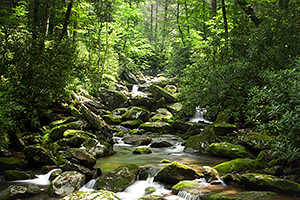 Stream in Great Smoky Mountains Tennessee, photo by Christi Root