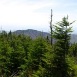 As temperature rises, it could change everything from fog frequency to soil properties. The resiliency of red spruce and Fraser fir, like these on Clingmans Dome in Sevier County, Tenn., will affect the forest's rare inhabitants. Photo by Brian Stansberry