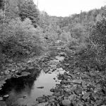 Above, Daddy's Creek, one of the tributaries to the Obed River, part of the Emory River system. Top inset, the Tennessee Dace, a fish known from the Emory River system.
