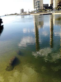 Manatees swim near intake pipes for a coal plant powering Tampa, Fla. Photo by Jamie Goodman