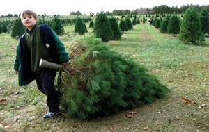 George Sorg hauls a Christmas tree at a farm near Gallatin, Tenn., that is no longer operating. Photo by CJ Sorg