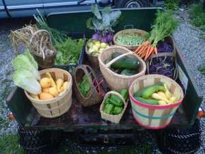 "This harvest is what Rick Cavey, a Virginia farmer and local food activist, calls a ""gator salad"" – a collection of fresh vegetables in the back of his John Deer Gator. Photo by Rick Cavey"