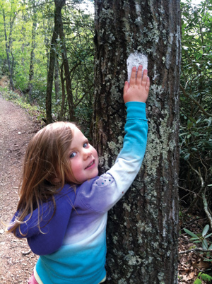 Susanna Campbell, age 4, gives the trail blaze a high-five during a hike with her mother and sister at Hungry Mother State Park. Photo by Paige Campbell