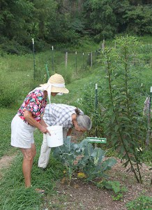 Arlean Lambert and Jenny Schwanke gather invasive Japanese beetles from a community gardener's plot.