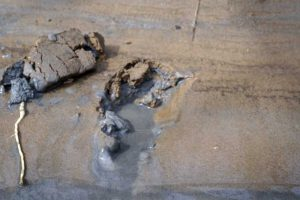 Dark gray coal ash permeates the soils along the Dan River. Photo courtesy of Waterkeeper Alliance.