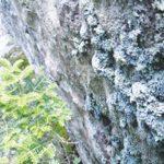 NN.Sidebar.Lichen.1_RGB