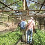 Sewanee students and Partners of Agriculture members monitor coffee tree saplings in their Haitian nursery. Photo by Charlotte Henderson