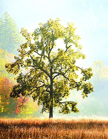 Fall-Hotaling_1_img