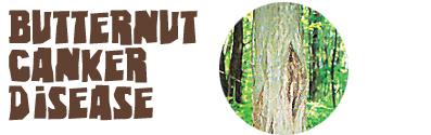 butternut-title