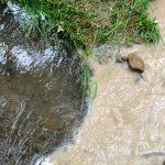 FrasureCreek_water