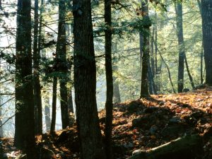 LostCoveWSA_Forest