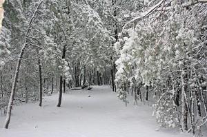 HH_Berea_woods