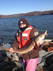 Graduate student Christina Saidak holds a young, healthy lake sturgeon at Fort Loudon Reservoir on the Tennessee River. Photo by Keith Darner, University of Tennessee.