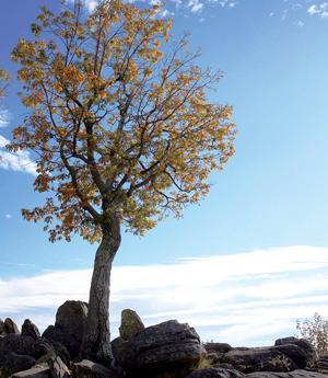 2010-fall