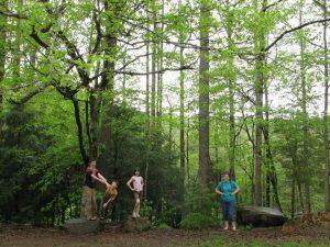 The Metcalf siblings – Joshua, Daniel, Hannah and Sarah – visit a Tremont phenology plot to take notes on April 25, 2014. Photo by Karen Metcalf