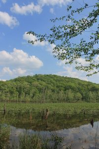 Lily pads at Zaleski State Forest. Photo by Dana Kuhnline
