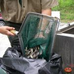Photo courtesy Trout Unlimited