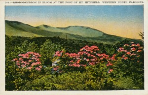 Image of Great Smoky Mountains National Park, left, presumed to be by George Masa, and postcard of Mt. Mitchell, above, made from George Masa photograph. Photos courtesy North Carolina Collection, Pack Memorial Public Library, Asheville, N.C.