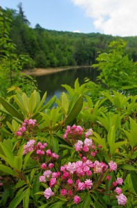 A view of Birchfield Camp Lake in June. Photo by Marty Silver, Tennessee State Parks