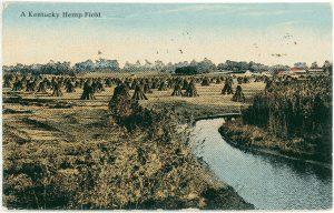TA postcard of hemp fields at the turn of the 20th century.