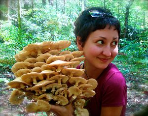 Honey mushrooms form as parasites on hardwood trees. Their underground mycelia can be long-lived and immense. Photo courtesy of No Taste Like Home