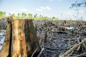 A cypress grove is reduced to stumps near the Enviva wood pellet factory in Ahoskie, N.C. Photo courtesy of Dogwood Alliance