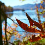 TG_mm_leaf_wataugalake