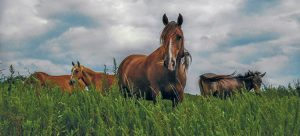 herd of horses in a grassy field