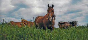 herd of horses in a grassy field