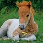 foal and flower