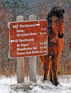 trail sign with pony