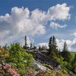 IMG_0491_kent_mason_trees_sky_clouds800
