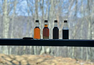 Different grades of maple syrup are displayed in a window. Photo by David Bruce.
