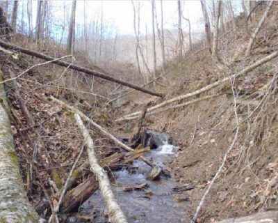 Damaged stream area of Lower Dempsey Branch