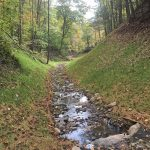 Restored section of stream