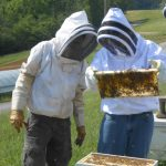 Bee keepers in Claiborne Co., Tenn.