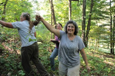 women harvest black cohosh