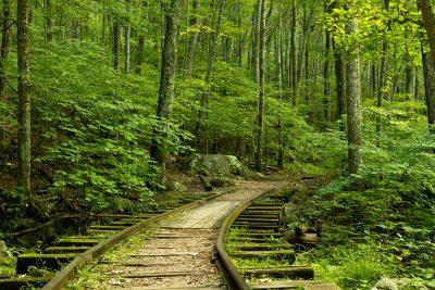 grassy railroad tracks