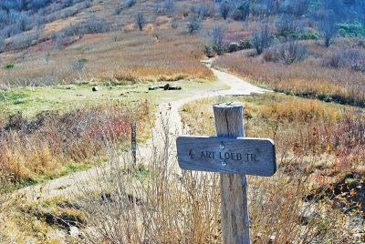 Spur Trails and Campsite Along Art Loeb Trail