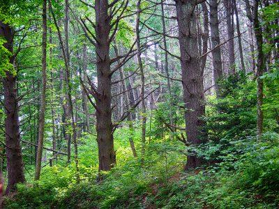 lush hemlock grove