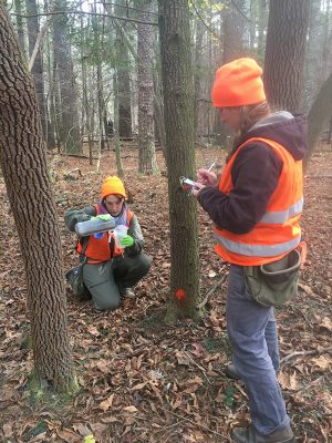 volunteers treat hemlocks with pesticides