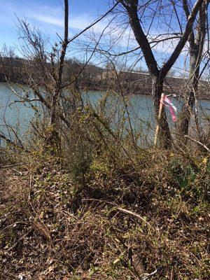survey stake by river