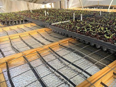 seedlings and tubing