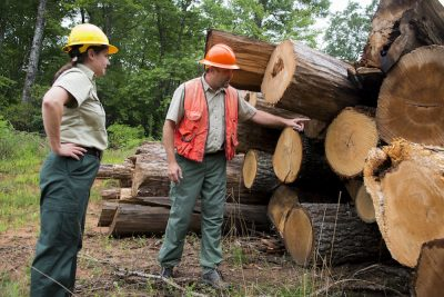 Timber Harvest in Pisgah National Forest