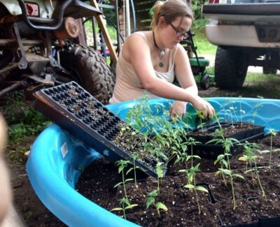 woman transplanting seedlings