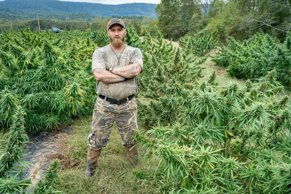 man in front of hemp field