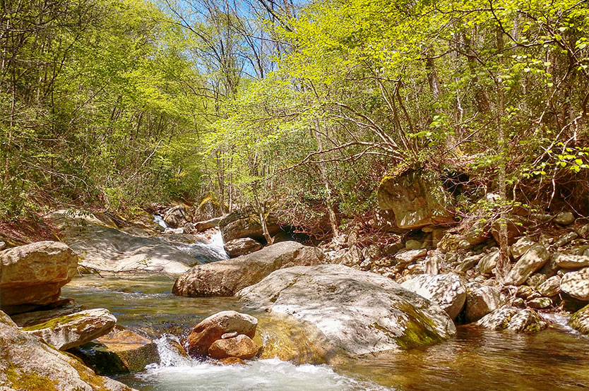 Wilson Creek in Pisgah National Forest
