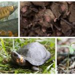Roanoke Logperch; Indiana Bat; Bog Turtle; Small-whorled Pogonia